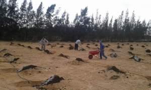 حجم جور الزراعة لا تؤثر علي مسافات زراعة التين الشوكي