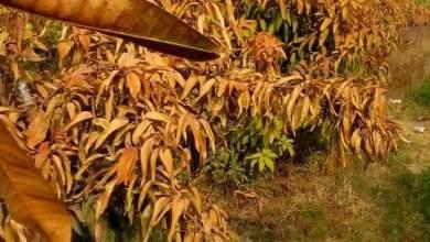 Photo of كيف تحمي النباتات ايام الصقيع .. 10 طرق لـ مقاومة الصقيع تعرف عليها