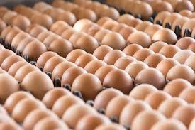 egg distribution in nigeria