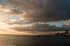 Mumuration, west pier and i360