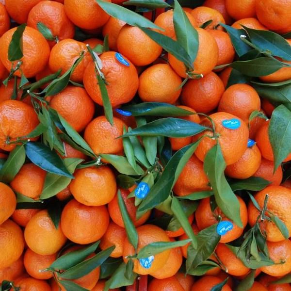 Clementine Tabasso 01