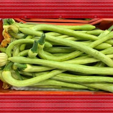 Zucchine Trombetta Tabasso