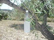 botella con feromonas colgada en olivo.