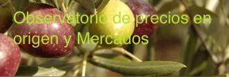 aceitunas y hojas