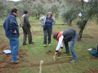 olivar ecológico