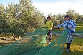 mujeres dando peonadas agrícolas