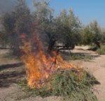 Precaución en la quema de residuos de la poda del olivar