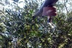 Web para la programación del riego y fertilización del olivar
