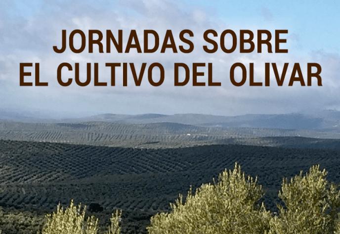 Jornadas olivar en ifeja