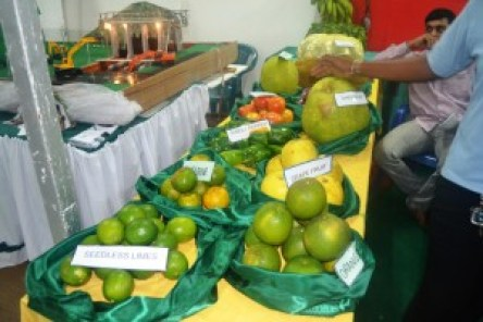 Some citrus fruits produced by NAREI on display at the Berbice Expo