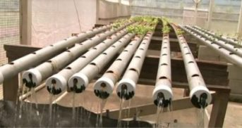 the-recycling-hydroponics-method-in-action-at-the-national-agricultural-research-and-extension-institute-narei