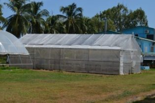 the-shade-house-at-the-national-agricultural-research-and-extension-institute-narei-used-for-hydroponics-farming