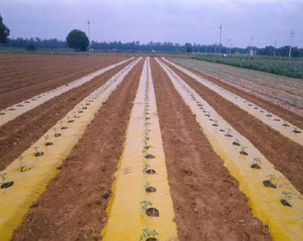 yellow-brown-mulch