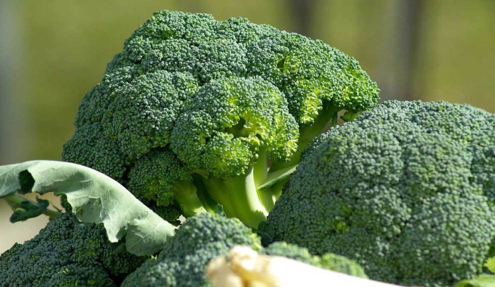 Broccoli Farming