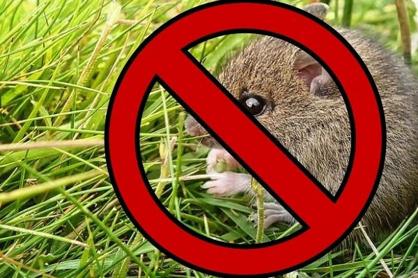 Tips and Tricks to Keep Rodents Away from Your Crops