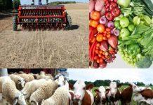 Suivi-Evaluation des Projets PPDRI en Algérie