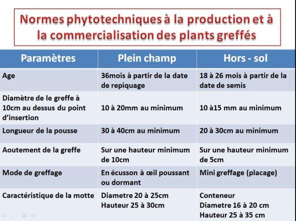 Normes phytotechniques à la production et à la commercialisation des plants greffés