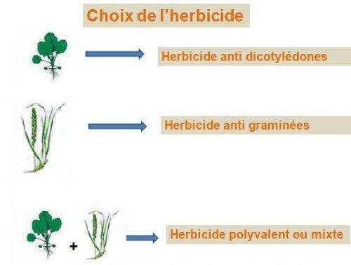 le choix de l'herbicide