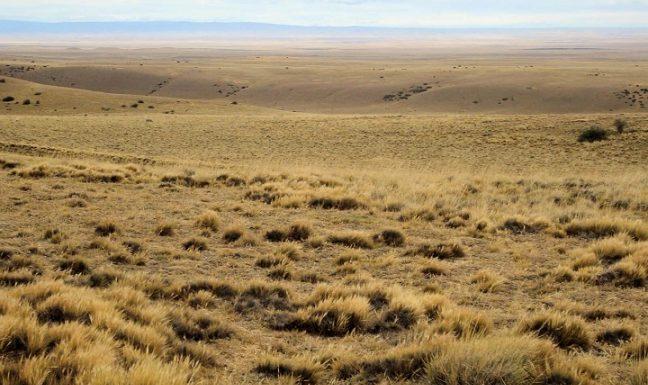 Ressources Pastorales et gestion d'exploitation Agricoles-Cas Wilaya de Saida