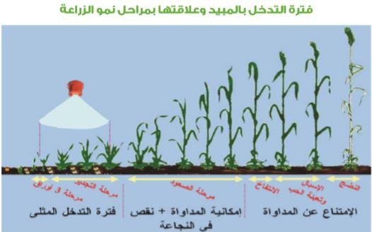 فترة التدخل بالمبيدات في زراعة القمح