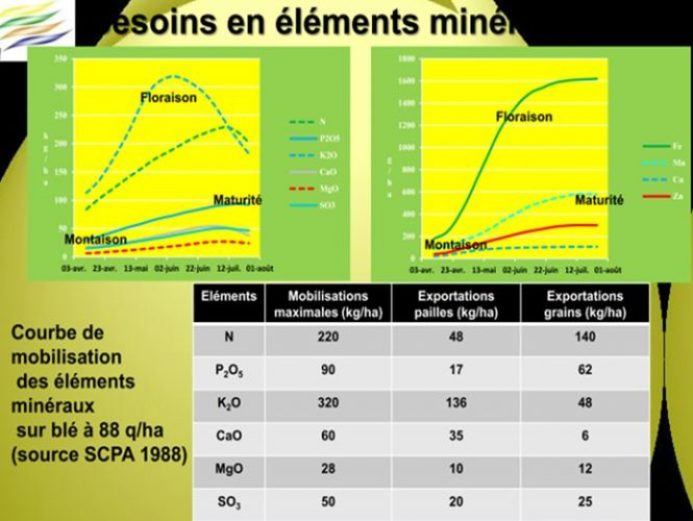 besoin en éléments minéraux