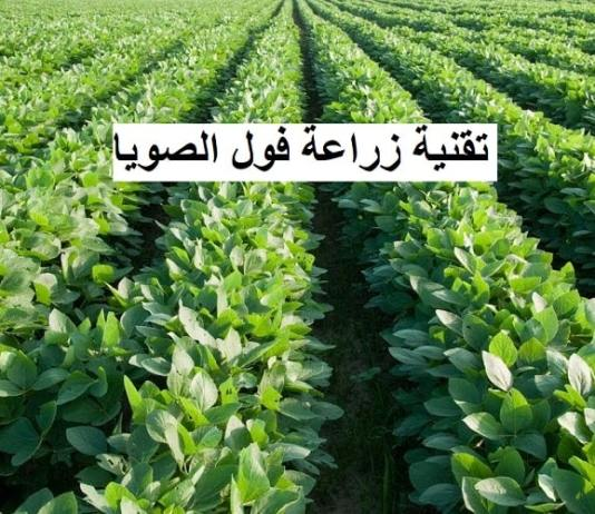 تقنية زراعة فول الصويا