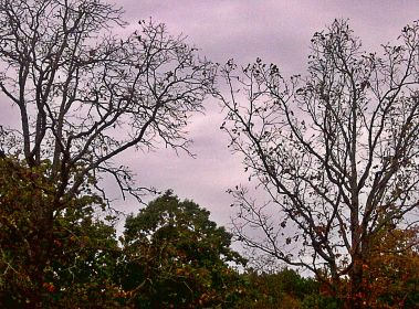 Many trees have started shedding leaves. Some like these are bare.