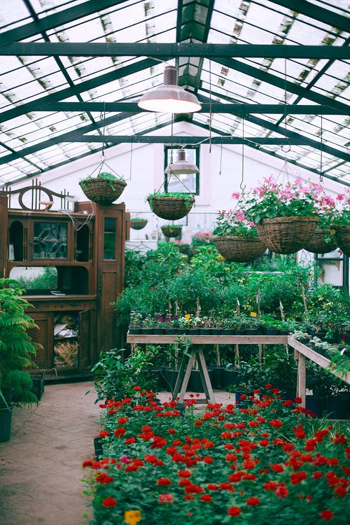 Picture of Greenhouse