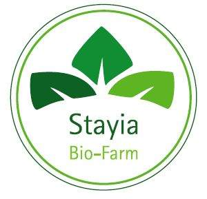 staya_logo