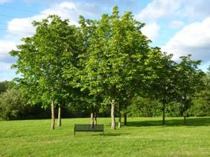 Winnersh_Meadows_Trees