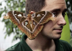 moth-on-ear