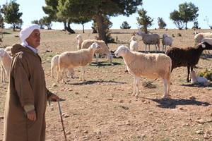 An Algerian farmer with his sheep.
