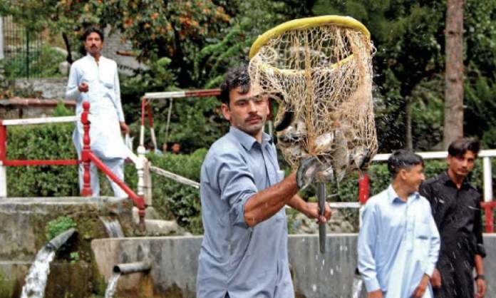 Besides scenic beauty, Swat has trout fish for tourists