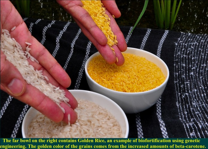 Bio fortification: To Overcome Malnutrition