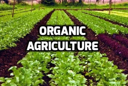 What is Organic Farming and its Constraints of in Pakistan
