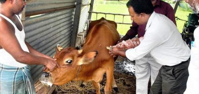 جانوروں کوواربل فلائی سے بچانے کیلئے مفت ویکینیشن جاری