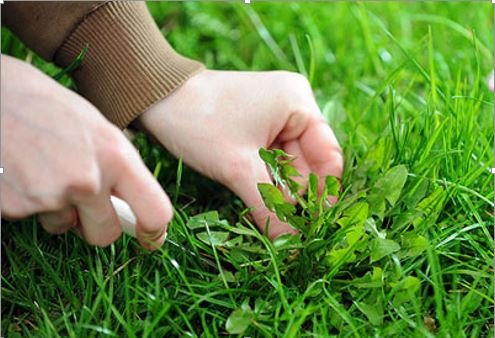 Economic Importance of Weeds