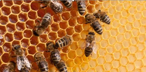 Apiculture and its economic importance