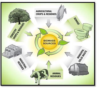 Biomass and Its Environmental impact – AgriHunt