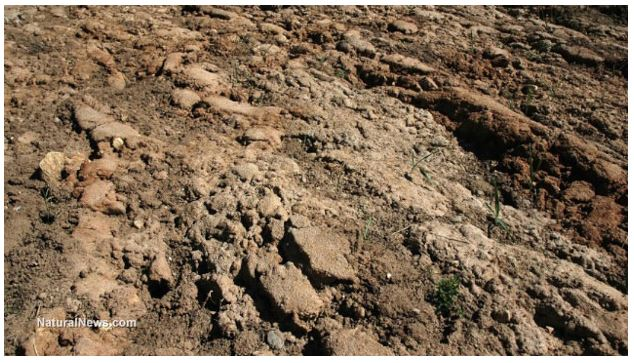 Soil organic matter: its impact on soil health and crop productivity