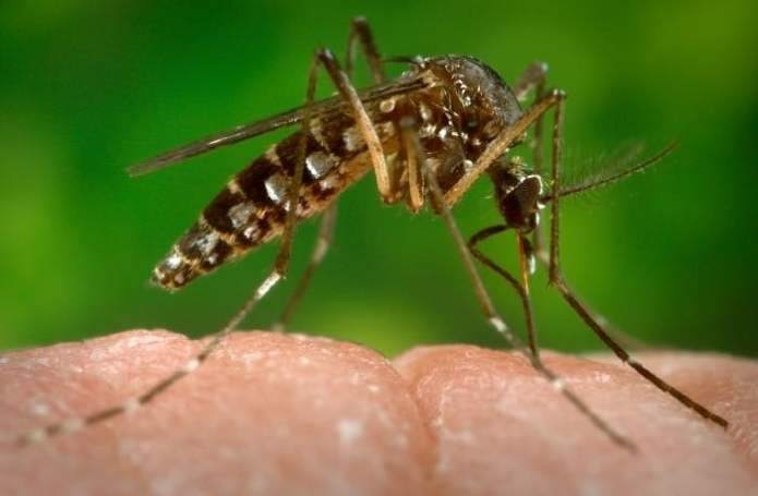 insect act as a carrier for transmission of virus