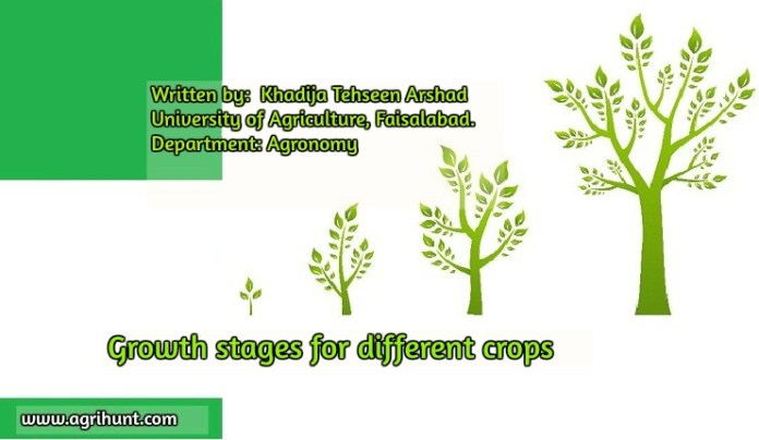 Growth stages for different crops