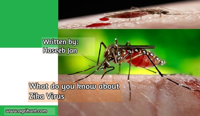 What do you know about Zika Virus:
