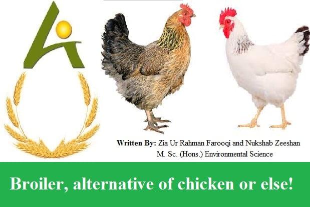 Broiler, alternative of chicken or else!