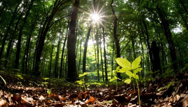 Forests, a cheap way to avoid climate change
