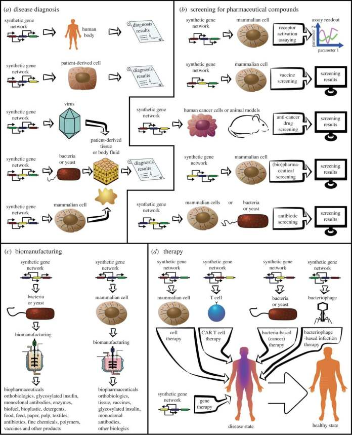 Synthetic Biology and Ethics