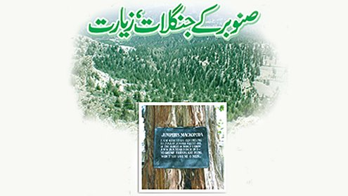 forest-day-and-pakistan