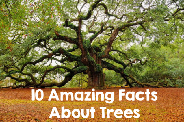 10 amazing and must read facts about trees