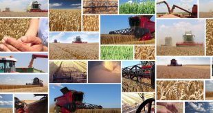 harvesting-and-storage-of-wheat-crop