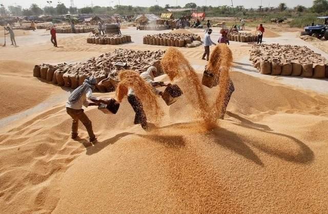 Wheat procurement campaign continues in Punjab